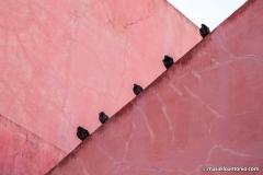 piccioni_1sito